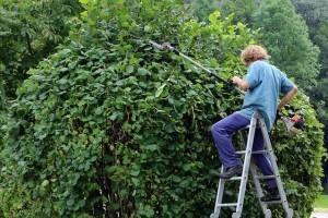 Welche Gartengerät für die hecke?