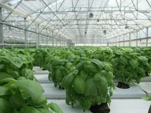 Die idealen Pflanzen für ein Gewächshaus