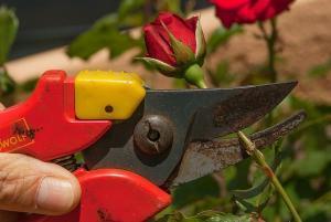 Das gibt es zu beachten bei einer Gartenschere