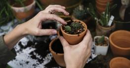Gartentipps für Anfänger