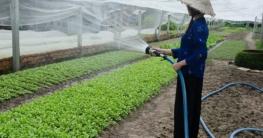 Warum Garten Pflegen